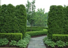 Arborvitae-and-boxwood-in-a-manicured-garden-217x155