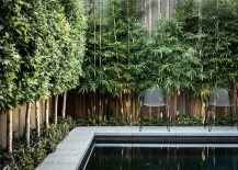 Bamboo adds greenery to a poolside fence 217x155 10 Privacy Plants for Screening Your Yard in Style