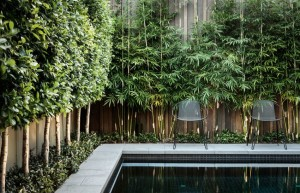 Bamboo adds greenery to a poolside fence
