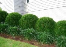 Boxwood-shrubs-provide-a-mini-wall-of-greenery-217x155
