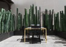 Cacti-provide-privacy-at-El-Montero-in-Mexico-217x155