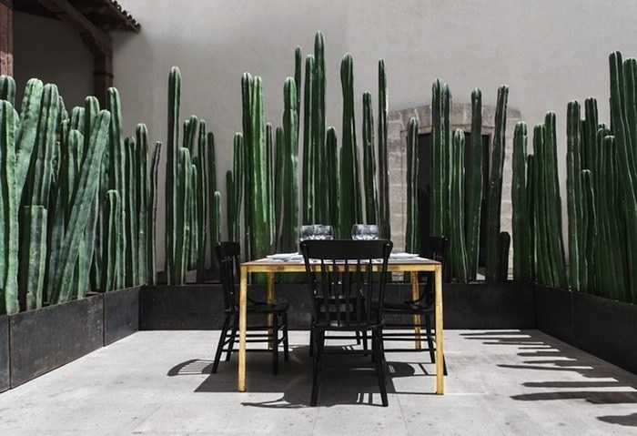 Cacti provide privacy at El Montero in Mexico