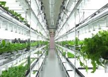 Futuristic hydroponic system