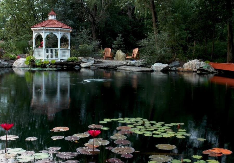 Gazebo by a lily pond