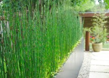Horsetail reeds provide a natural privacy fence
