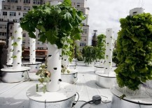 Hydroponic towers on a rooftop garden