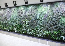 Hydroponic living wall in a commercial space