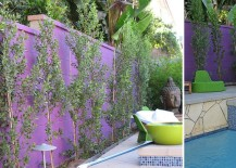 Italian Buckthorn is the perfect choice for this purple wall
