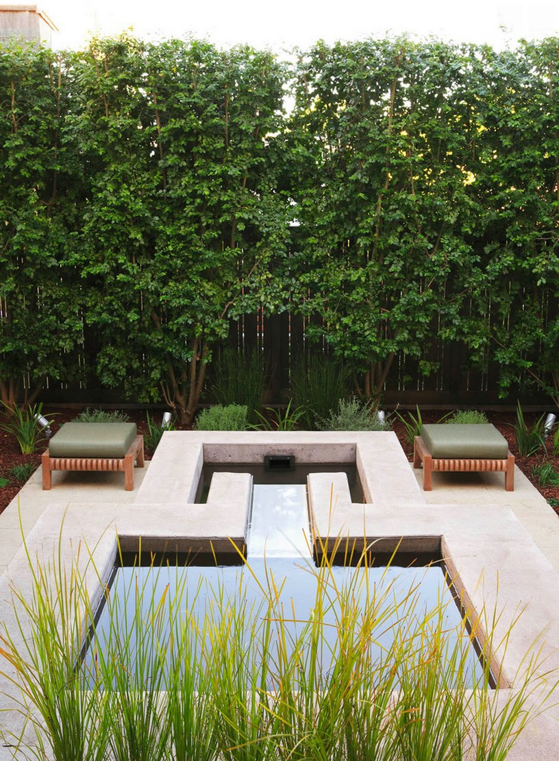 Italian buckthorn adds greenery to a modern patio