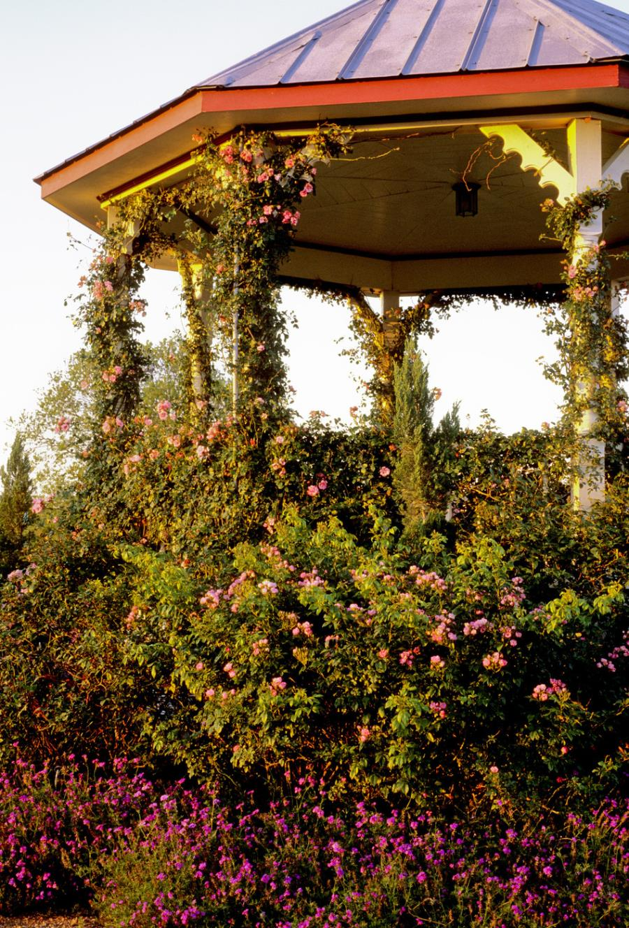 Lovely gazebo with climbing vines