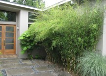 Non invasive clumping bamboo near a front entrance 217x155 10 Privacy Plants for Screening Your Yard in Style