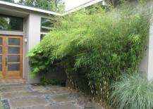 Non-invasive-clumping-bamboo-near-a-front-entrance-217x155