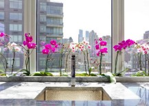 Orchids-are-a-popular-hydroponic-plant-217x155