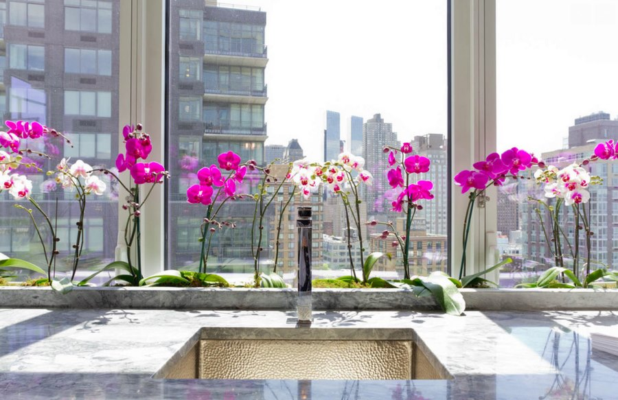 Orchids are a popular hydroponic plant