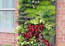 Outdoor living wall featuring a range of plants