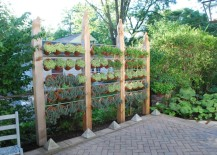 Privacy-screen-of-plants-217x155