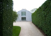 Privet-creates-tall-green-hedge-formations-217x155