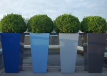 Sculpted-boxwood-in-tall-planters-217x155