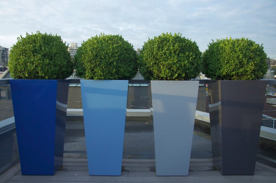 Sculpted boxwood in tall planters