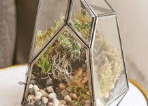 Smoked-glass-terrarium-from-Urban-Outfitters-217x155