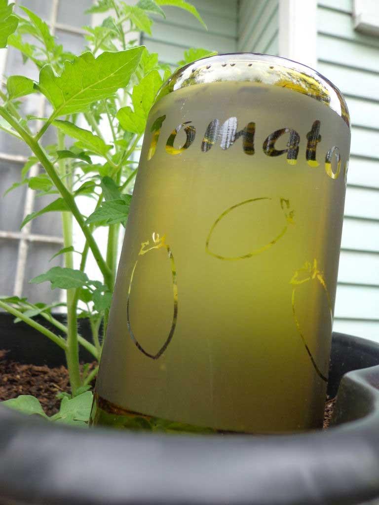 Upcycled Wine Bottle Plant Waterer