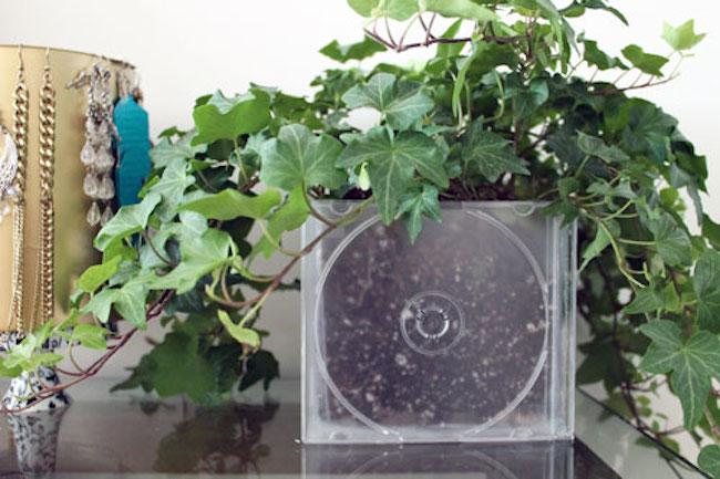 cd planter 2
