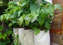 herb garden 5
