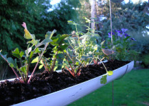 herb-garden-6-217x155