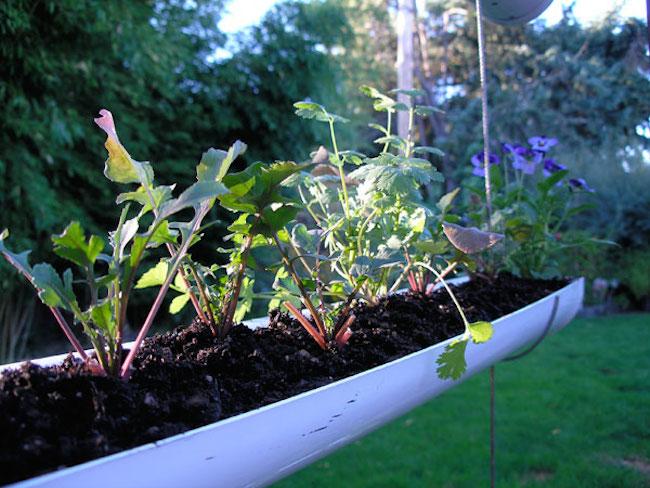 herb garden 6
