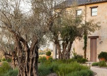 Landscape around the ranch house with olive trees