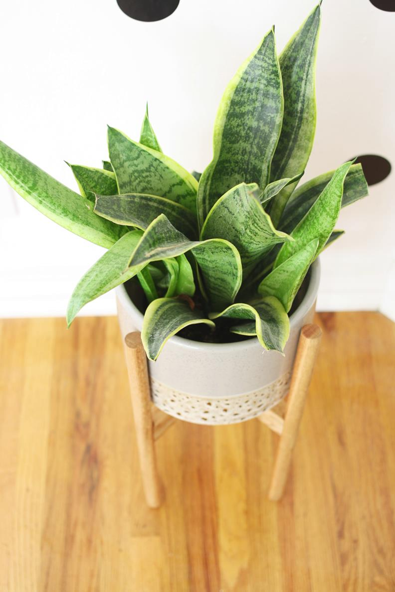 Wood Plant Stand From Hello