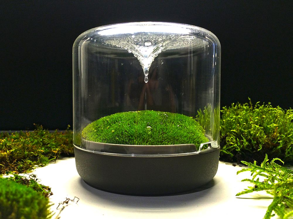 A mini ecosystem that adds moss green to your home