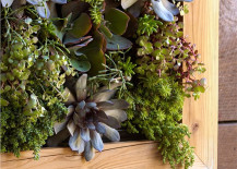 closeup of vertical garden with wood frame
