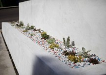 Collection of succulents in a front yard area