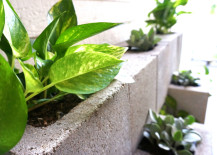Concrete block wall with Golden Pothos