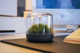 Sanctuary: Little Mossarium Brings a Slice of Natural Haven Indoors!