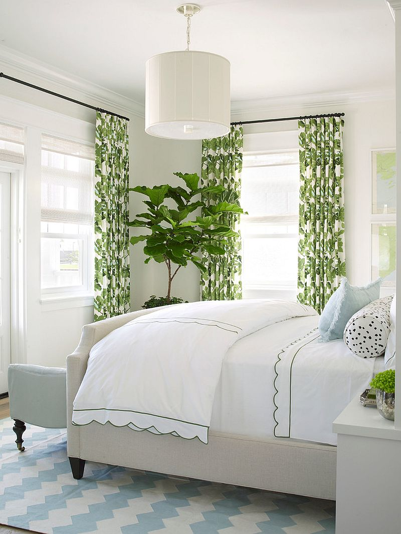 Blue and green bedroom -  Drapes And Fiddle Leaf Fig Tree Add Color To The White Bedroom Design