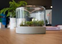 Easy-to-maintain contemporay design of the delightful little mossarium