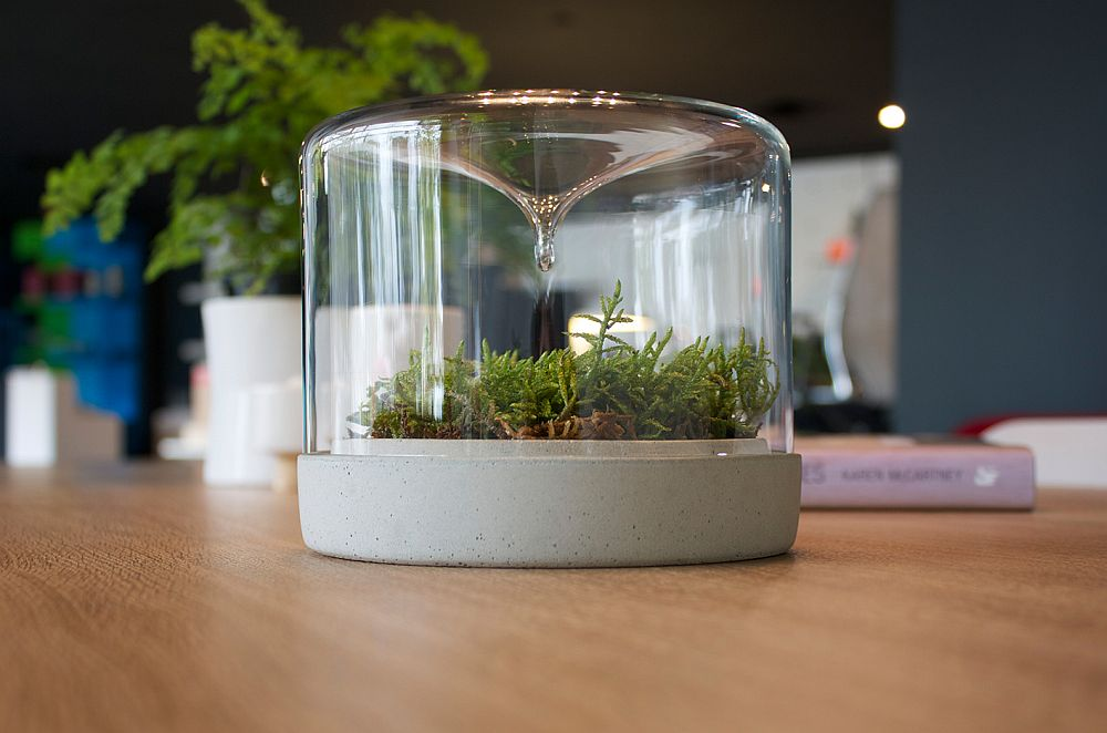 Easy-to-maintain contemporay design of the delightful little mossarium