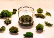 Finding-the-right-moss-for-your-lovely-little-mossarium-217x155