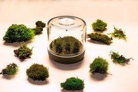 Finding the right moss for your lovely little mossarium
