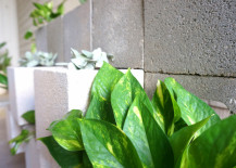 Golden Pothos planted in a concrete block wall