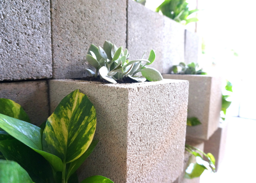 Golden pothos and Kalanchoe in a cinder block wall