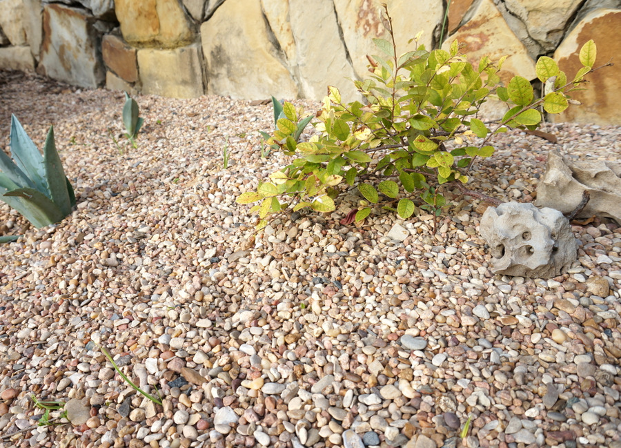Graveled area without landscape fabric