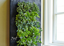 indoor vertical garden on chalkboard backing beside window