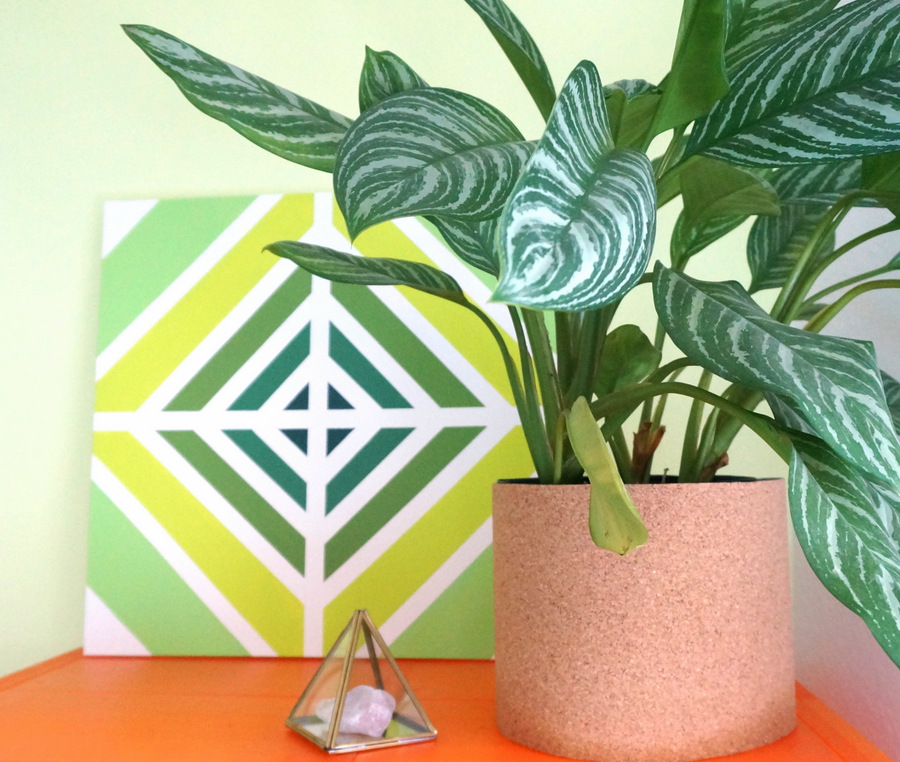 Large plant and geo art on an orange shelf