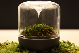 Natural process of evaporation and condensation provide water to the moss
