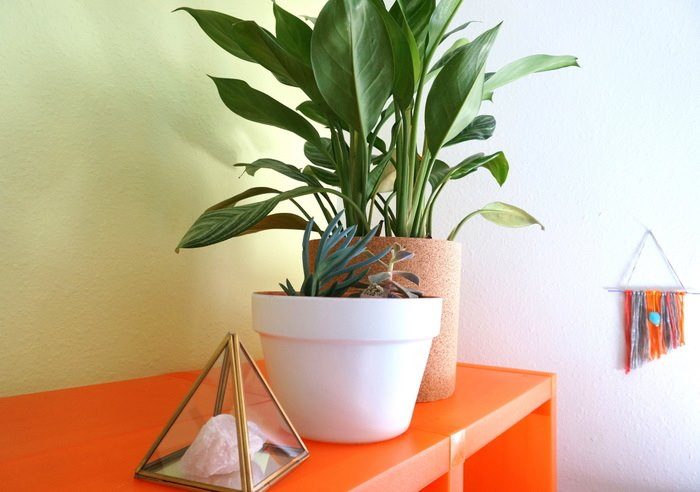 Plants are ideal for shelf-top style