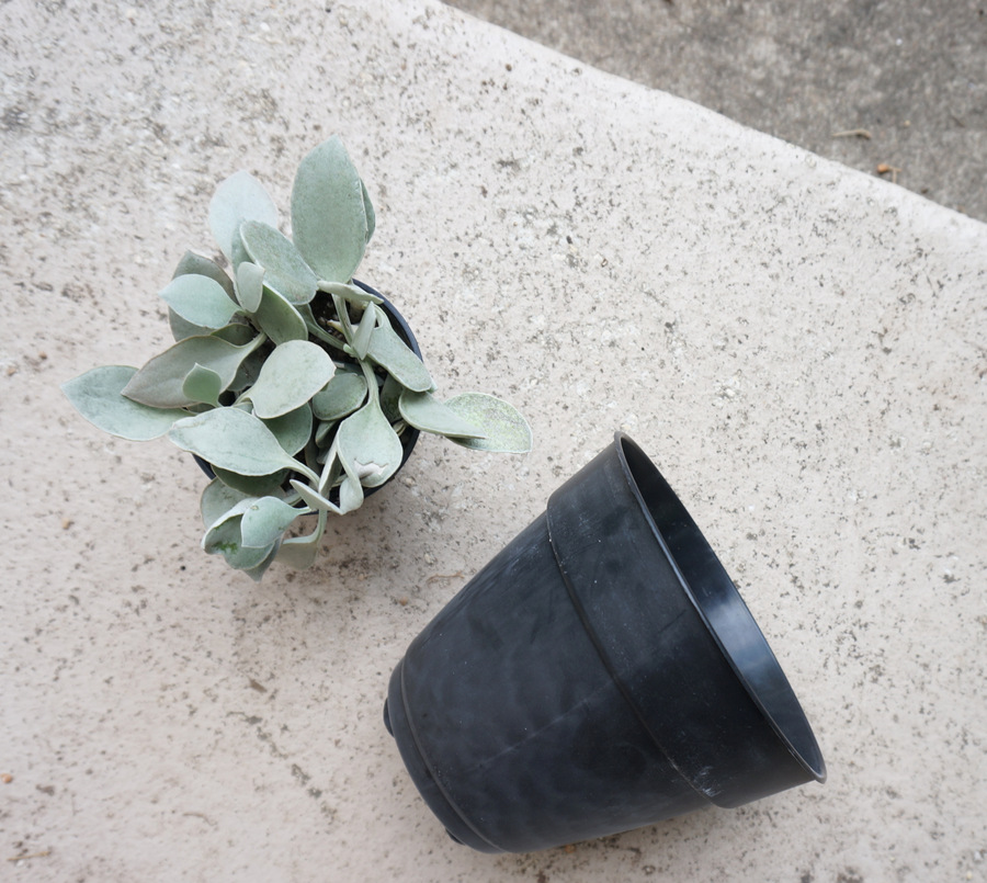 Plastic pots make this project easier