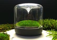 Stylish mossarium brings the charm of rainforest indoors